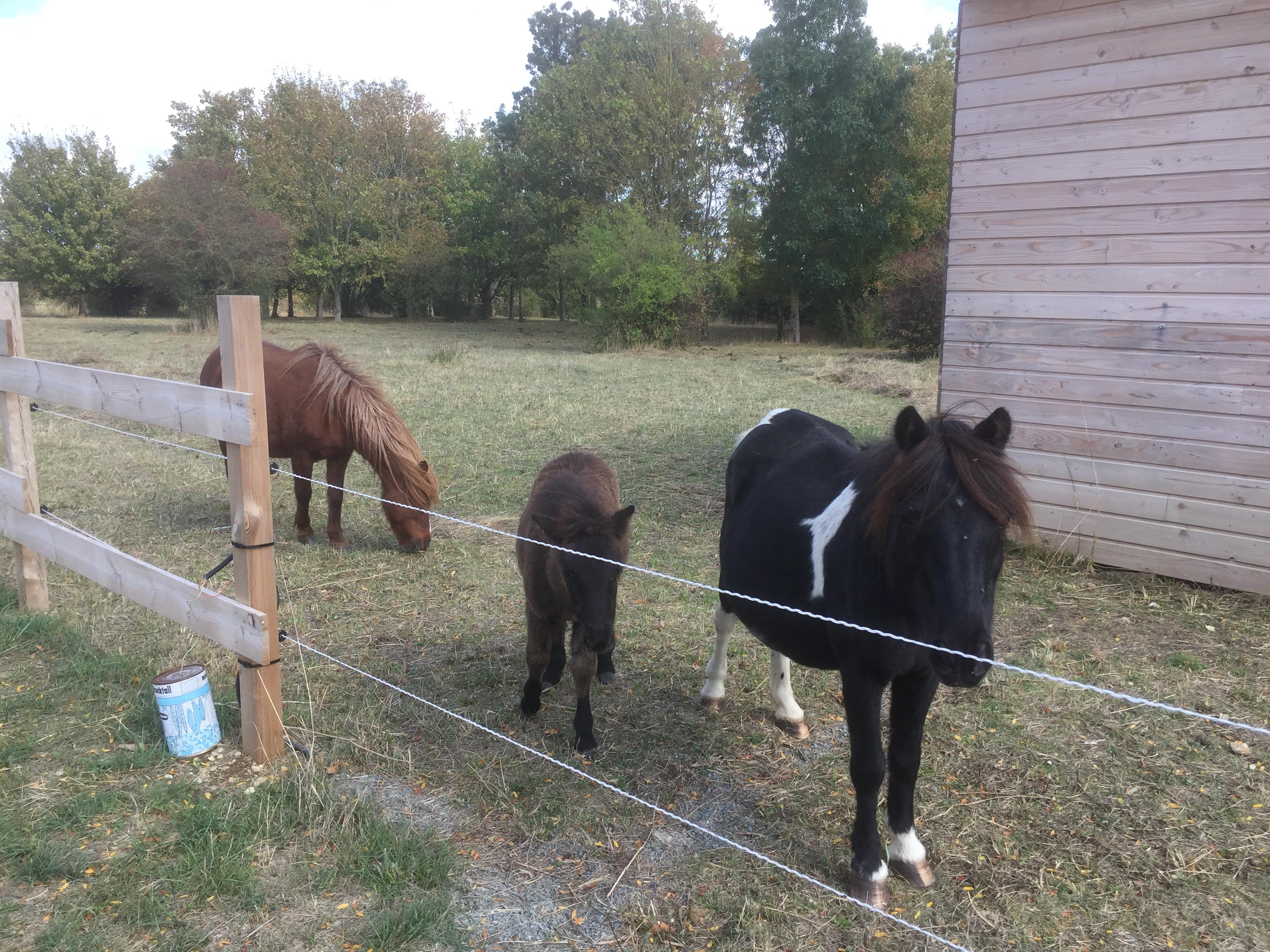 Bienvenue aux poneys !